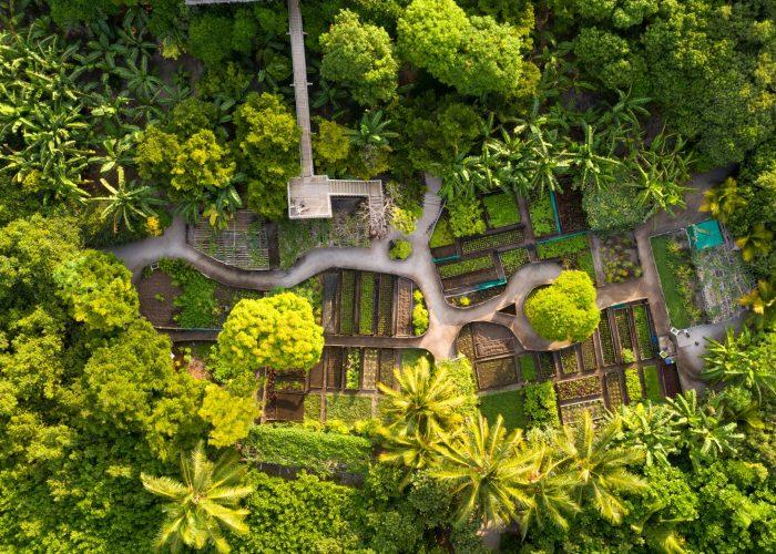 13856_Soneva Fushi - Organic Gardens